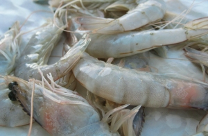 Shrimps Was kochen beim Segeln