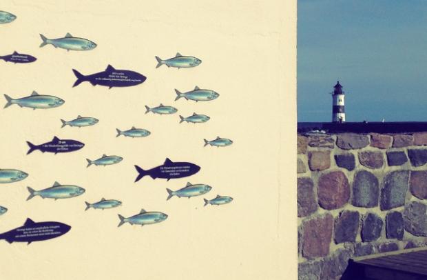 Schlei Heringe auf der Lotseninsel auf Segeln, kochen und Meer