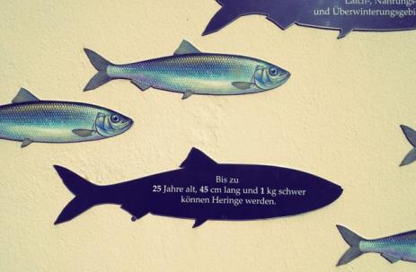 Lotseninsel Schleimünde Seglerküche