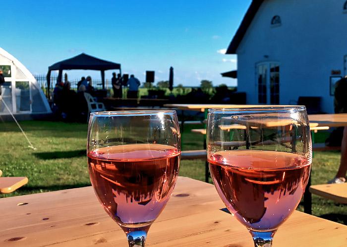Weinanbau auf Årø in Dänemark