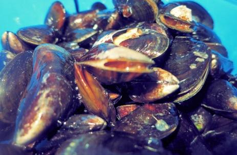 Muscheln Seemannsart Segeln Kombüse