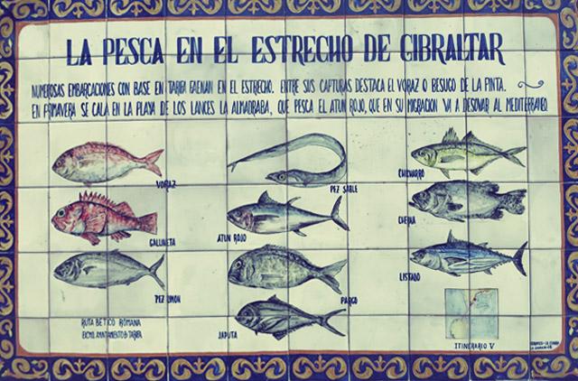 Tarifa Thunfisch Segeln Kombüse Rezepte