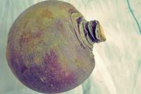 Steckrüben - Rezept Was koche ich beim Segeln?