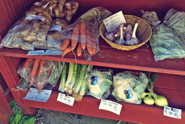 Samsoe, Segeln Törnziel und kulianarische Empfehlungen