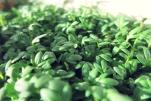 Senfeier- Rezept für Bordküche und Pantry, Segeln