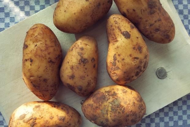 Senfeier: Was kochen beim Segeln - Rezept für die Pantry