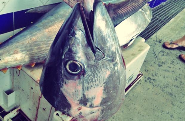 Mit Quecksilber Thunfisch auf dem Markt