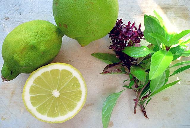 Mango-Gurkensalat Aromaten für die Segler-Kombüse