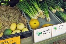 Segeln in Dänemark Gemüse auf Tunö