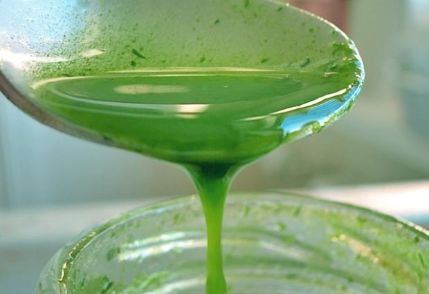 Dill Öl mit Dillpüree selbstgemacht