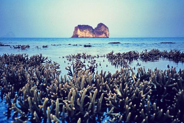 Korallenriff Thailand 1993