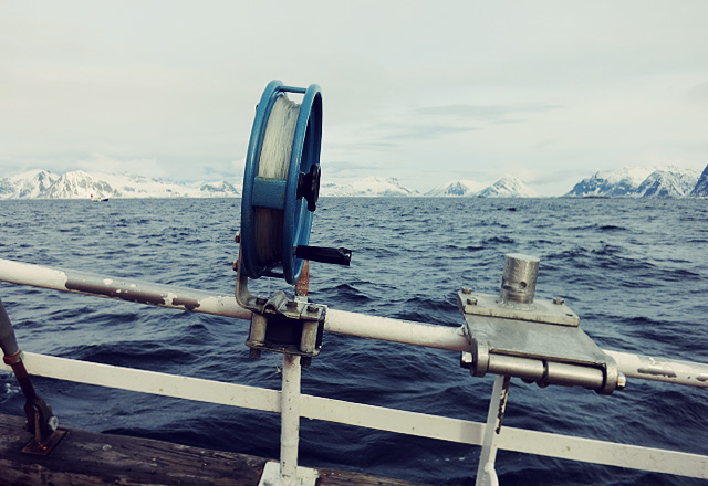 Skrei Angeln auf den Lofoten im März