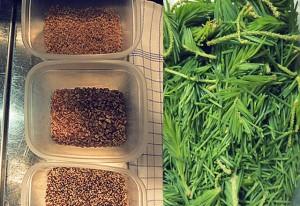 Finnisch kochen: Fichtenknopsen Müsli Körner