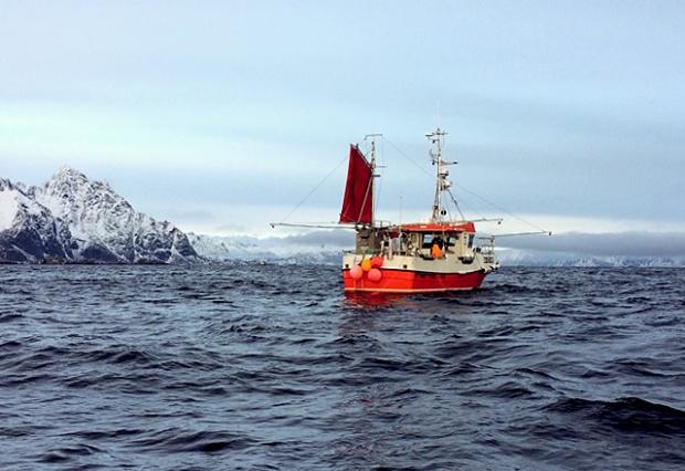 Die See kocht: Skrei Fischfang Henningsvaer Lofoten