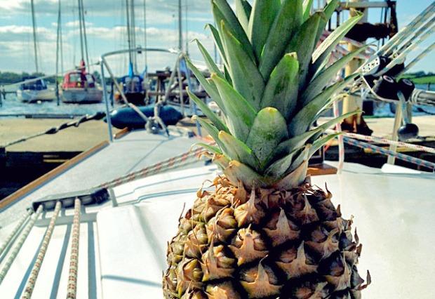 Ananas als Segel Proviant. Wie lagern