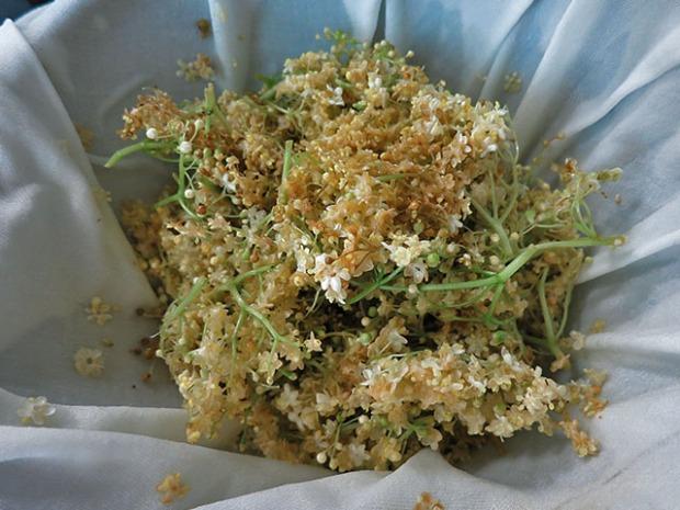 Holunder Blüten durch Tuch gefiltert