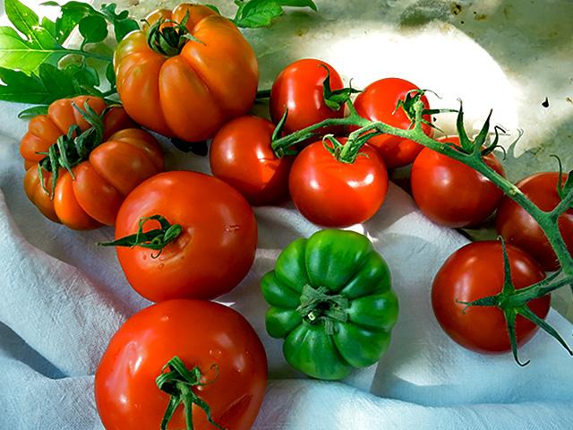 Im Juni reife Tomaten Sorten