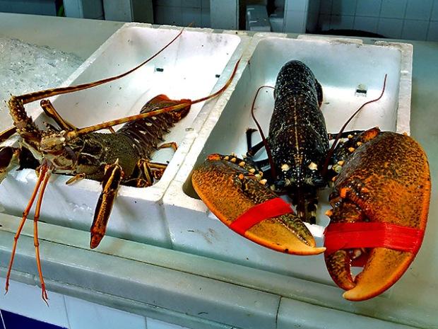 Hummer und Languste auf Fischmarkt
