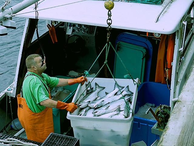 Wildlachs Fischer Alaska Copyright Friedrichs