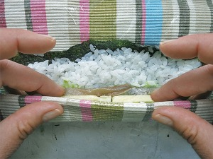 Sushi Bilder handgerollt DIY