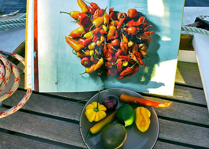 Aji Chilis für Ceviche