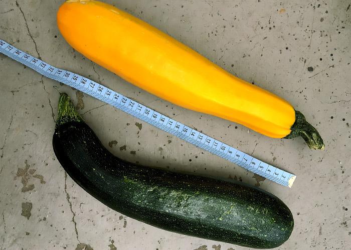Zucchini gelb und grün groß