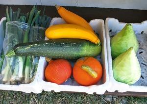 Zucchini und Kürbis in Dänemark