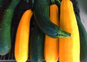 Garten Zucchini am Stand
