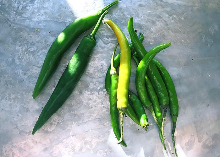 Gruene Chili mild und scharf