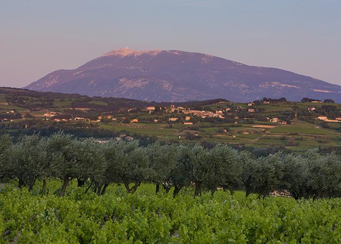 Am Mont Ventoux in der Provence wachsen die Rotweine